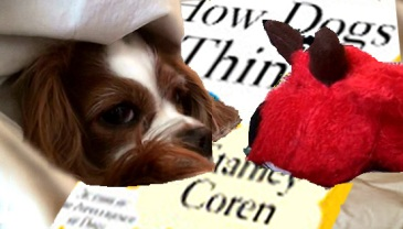 roxiereddogandhowdo-dogs-think-copy.jpg