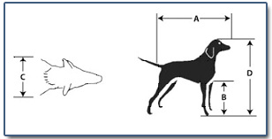 Measuring your pet for air canada