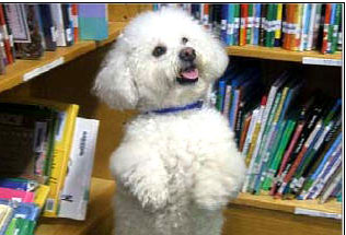 Kizzy One Incredible Dog Kizzy is a Reading Education Assistance Dog