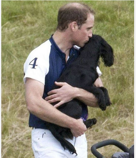 Lupo of Cambridge Prince William Duke Of Cambridge September 20 2013