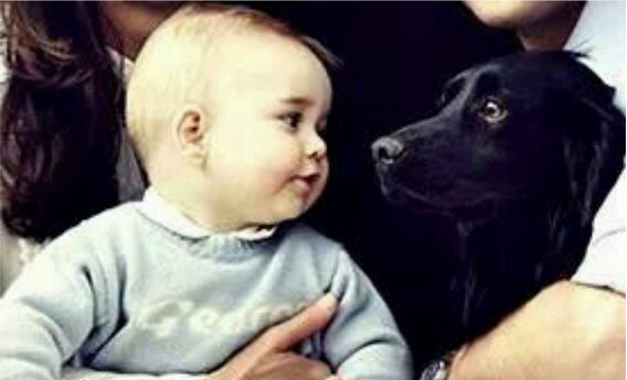 Prince William And Kate S Dog