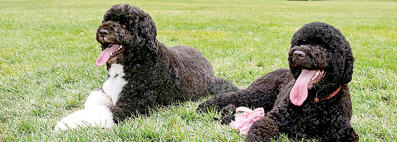 Sunny and Bo Obama resting on Whitehouse Lawn