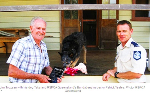 Teka the three-year-old Australian cattle dog has been given the RSPCA's animal achievement award following the 2007 feat after performing CPR on his owner 3 bdf