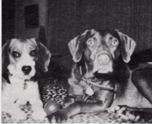 Brian Wilsons dogs Banana and Louie