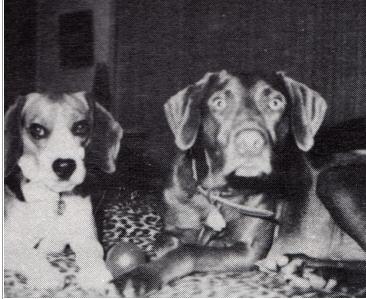 Brian Wilsons dogs Banana and Louie