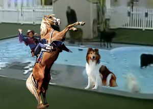 Roy Rogers Trigger and Lassie at swimming pool
