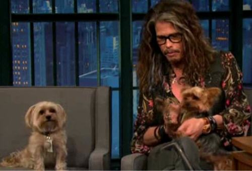 steven-tyler-and-his-dogs-butch-cassidy-and-sundance